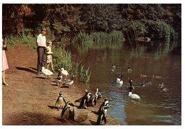(101) USA - Tropical Bird Garden, Rode - Oiseaux