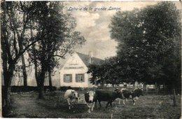1 Oude Postkaart  Drogenbos Drogenbosch  Laiterie De La Grande Lampe - Drogenbos
