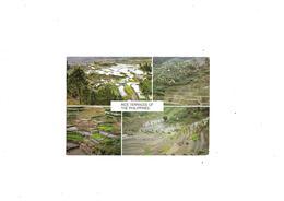 Caqrte Postale Philippines Rice Terraces Of The Philippines - Philippines