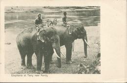 ELEPHANTE AT TERRY NEAR KANDY, SRI LANKA, PC, Uncirculated - Sri Lanka (Ceylon)