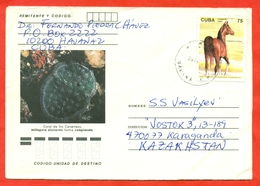 Cuba 1995.Horse, Coral. Envelope Passed The Mail. - Cuba