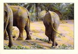 Afrique-CÔTE D'IVOIRE Zoo D'ABIDJAN ( éléphant éléphants  (-MAURICE ASCANI 35) *PRIX FIXE - Ivory Coast