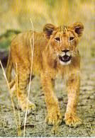 Afrique-CÔTE D'IVOIRE Parc National De La Comoé  (mammifères Mammifère Faune Fauna)(photo J-C NOURAULT 84595) *PRIX FIXE - Côte-d'Ivoire