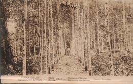 Congo Belge Plantation D Heveas - Other