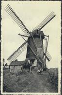 ARENDONK * BEREN MOLEN ( 1790-1929 ) * NIET VERSTUURD - Arendonk
