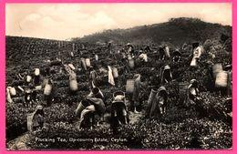 Ceylon - Plucking Tea - Up Country Estate - Cueilleuse De Thé - Cueillette - Panier En Osier - Animée - PLATE Ltd N° 26 - Sri Lanka (Ceylon)