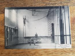 """CP Tournai 1912 """"Collège Notre-Dame, Salle De Gymnastique Suédoise - Lagaert, Brux."""" - Tournai"""