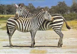 ** ( Lot De/of 2 Cartes / Postcards) ** AFRIQUE Africa ( Wild Life East Africa ) ZEBRA Zèbre - CPSM CPM GF - - Zèbres