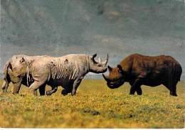 ** ( Lot De/of 3 Cartes / Postcards) ** AFRIQUE Africa ( Wild Life East Africa ) RHINOCEROS Nashorn Neushoorn Rinoceront - Rhinocéros