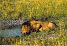 ** ( Lot De/of 2 Cartes / Postcards) ** AFRIQUE Africa ( Wild Life East Africa ) LION Löwe Leeuw Leon Leone - CPSM GF - Lions