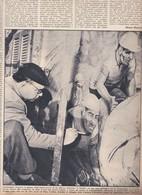 (pagine-pages)ARCUMEGGIA E ALIGI SASSU  Oggi1958/33 - Books, Magazines, Comics