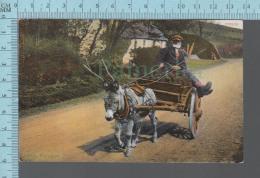 Irlande - Animated Irish Transport , Ane, Chariot - ED: 2105/18 -  CPA - Irlande