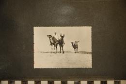 PHOTOGRAPHIE, Chameaux, Afrique , Chameliers Dans Le Desert - Africa