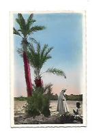 LE CONTE A L'OMBRE DES PALMIERS SERIE L'AFRIQUE - Tunisia