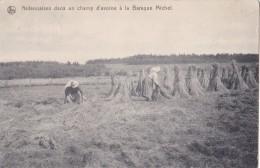 Ardennaises Dans Un Champ D'avoine à La Baraque Michel Circulée En 1912 Et Postée à Jalhay - Cultures