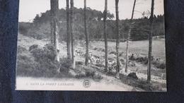 CPA 40 Landes  - Dans La Forêt Landaise - France