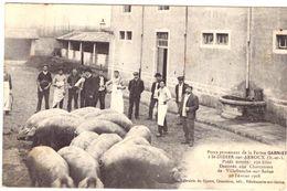 Porcs Provenant De La Ferme Garnier à St Didier Sur Arroux 1908 - Francia