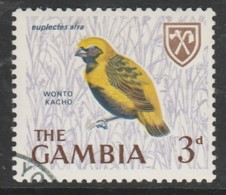 Gambia 1966 Birds  3 P Multicoloured SW 221 O Used - Gambia (1965-...)