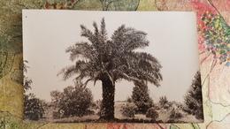 Georgia. Batumi . BATUM. Palm Trees - Old Postcard   USSR - 1920s - Georgia