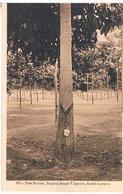 CEYLON  SRI LANKA PARA RUBBER  TAPPING  SINGLE  V  SYSTEM.  KUALA  LUMPUR TBE  T58 - Sri Lanka (Ceylon)