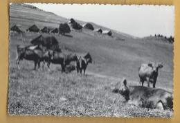 """C.P.M. Saint-Jean-de-Maurienne - JARRIER """" Alpage à La Balme """" - Saint Jean De Maurienne"""