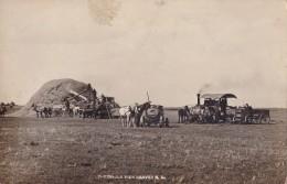 Photo Carte Threshing View Harvey  Circulée En 1910 - Etats-Unis