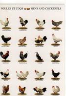 Poules Et Coqs Nouvelles Images 2000 - Vaches