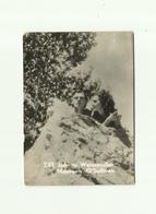 -**1 X  Johnny Weissmuller & Maureen O'Sullivan   ** -Belgian  Chewing  Gum -nr.241 - Photographs
