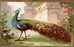 CHROMO  LE PAON - Trade Cards