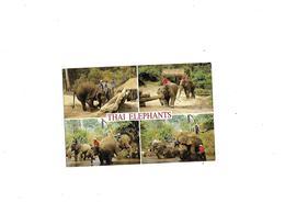 Carte Postale Thai Elephants Thailand - Thaïlande