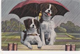 CPA Deux Chiens Sous Un Parapluie Pépin Pébroque Dog Fantaisie - Chiens