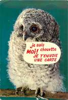 CPSM Animaux Humoristique-La Chouette                                           L2657 - Humour