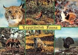 """0176 """" LAPPLANDSK - FAUNA  """"  - CART. ORIG.  SPED. - Svezia"""