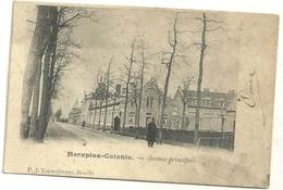 Merxplas-Colonie : Avenue Principale - Merksplas