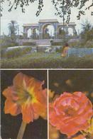 IRAQ - Al Andalus Garden In Basra - Iraq
