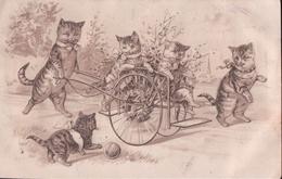 Chats Humanisés En Charette (1905) - Katten