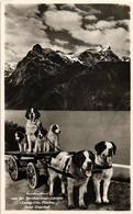 """Postcard Dog Cart Attelage De Chien SUISSE Real Photo - Bernhardiner """"ZWING-URI Hotel URNERHOFFLUELEN ZUCHTEREI - LU Lucerne"""