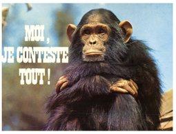 (ORL 864) Ape - Singe - Humour