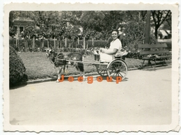 Photo Woman In Goat Cart Argentina - Persone Anonimi