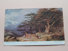 Cedars Of LEBANON / Cèdres / Cedern ( Série 782 - N° 43 Palästina ) Anno 1922 ( Voir Photo ) ! - Liban