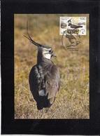 BELARUS2006, CARTE MAXIMUM BIRDS - VANELUS VANELUS ** - Sparrows
