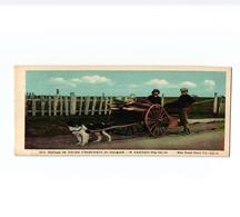 WEST Bathurst HENDERSON  (Attelage De Chien, Dogcart, Hondenkar ) Transport Of Wood GASPE COAST CANADA 13,X9cm - Honden
