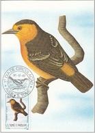 """729 S. Tomè E Principe 1983 Birds FDC Thomasophantes Sanctithomae """" Passero Endemico """" Passeri Maximum Card Maxi - Sparrows"""