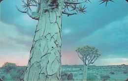 Namibia NMB-19 Koker Boom Tree - 50$ - Namibia