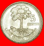 # BIRD (1977-2010): GUATEMALA ★ 5 CENTAVOS 1998 MINT LUSTER! LOW START ★ NO RESERVE! - Guatemala