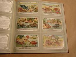 DE SCHILDPADDEN Les Tortues Liebig Série Reeks 6 Chromos Nederlandse Taal Trading Cards Chromo - Liebig
