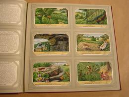 DE SPINNEN Les Araignées Liebig Série Reeks 6 Chromos Nederlandse Taal Trading Cards Chromo - Liebig