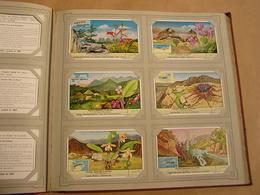 WEINIG BEKENDE PLANTEN Plantes Liebig Série Reeks 6 Chromos Nederlandse Taal Trading Cards Chromo - Liebig