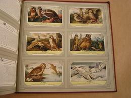 DE UILEN Chouettes Oiseaux   Liebig Série Reeks 6 Chromos Nederlandse Taal Trading Cards Chromo - Liebig
