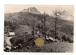 Prokletije Komovi Mountain - NON VIAGGIATA - Montenegro